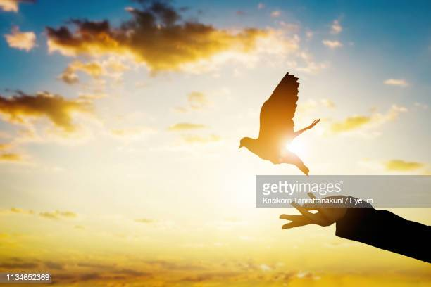 cropped hand releasing dove against cloudy sky during sunset - colomba foto e immagini stock