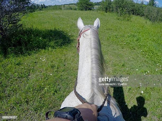 Cropped Hand Riding Horse On Grassy Field