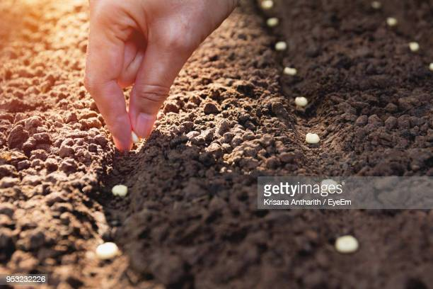 cropped hand sowing seeds in soil - semilla fotografías e imágenes de stock