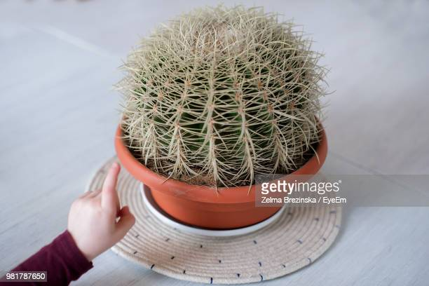 Cropped Hand Touching Cactus On Table