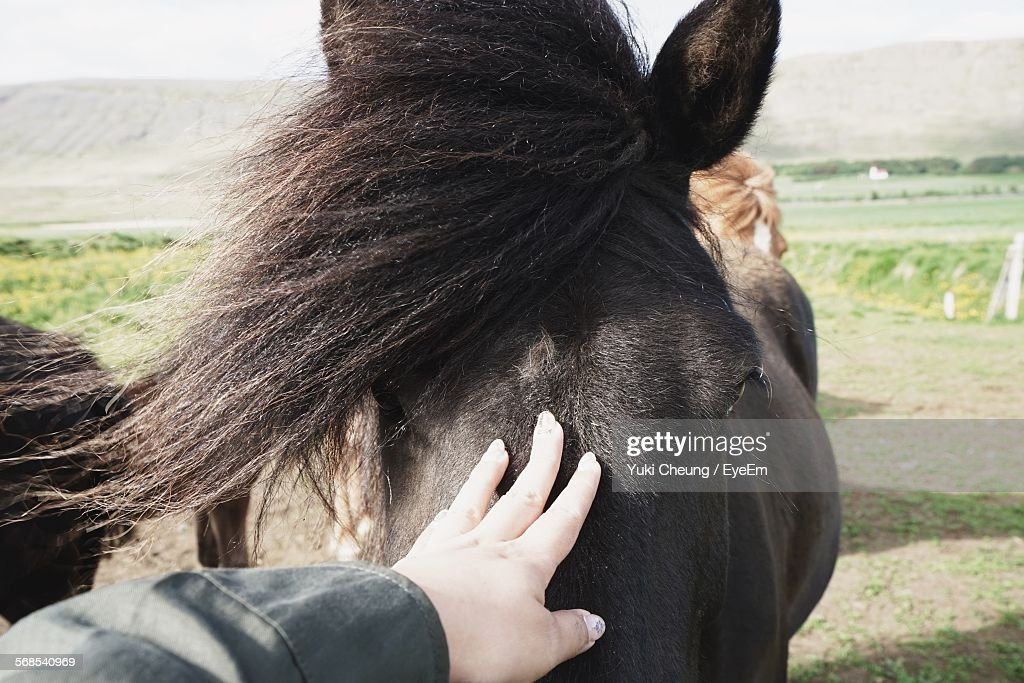 Cropped Hand Touching Horse : Stock Photo