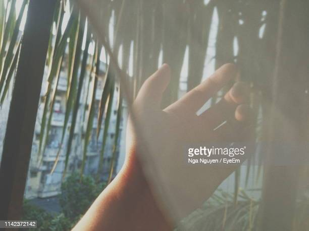 cropped hand touching leaves through window - nga nguyen stock pictures, royalty-free photos & images