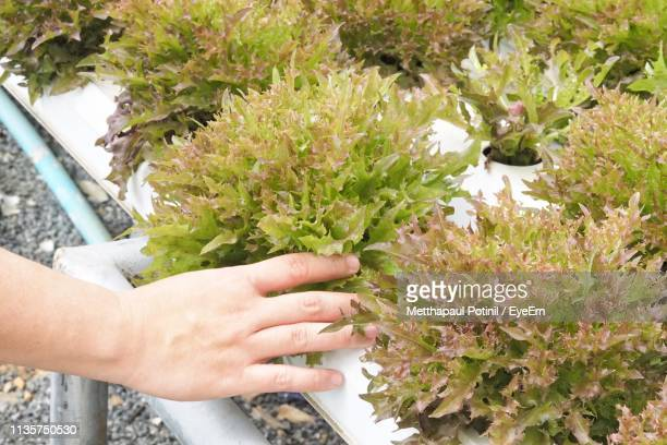 cropped hand touching plants - metthapaul stock photos and pictures