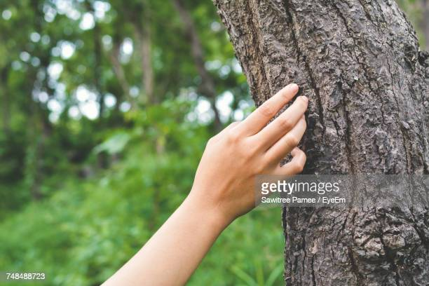 cropped hand touching tree trunk in forest - tronc d'arbre photos et images de collection