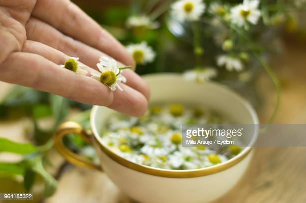 Cropped Hand With Flowers Against Bowl