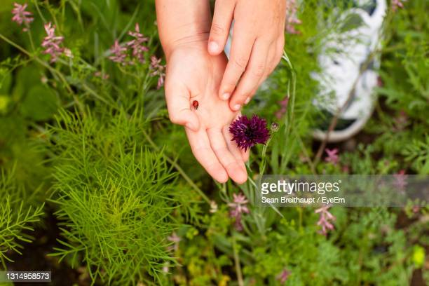 cropped hand with ladybug by flowering plants - unknown gender stock pictures, royalty-free photos & images