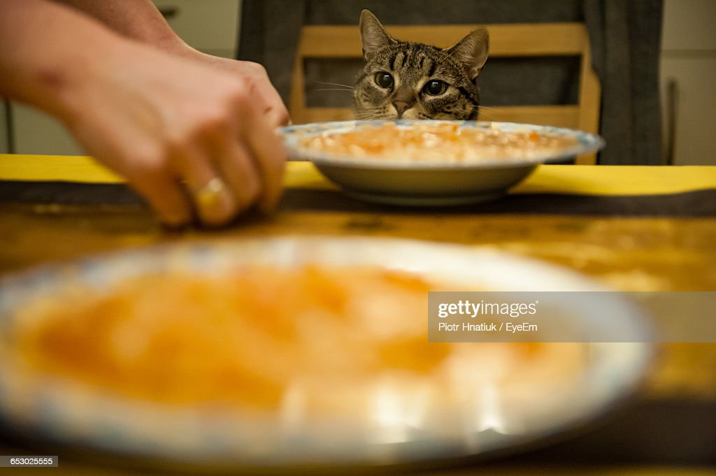 Cropped Hands By Soup In Plates Against Cat At Home : Stock Photo