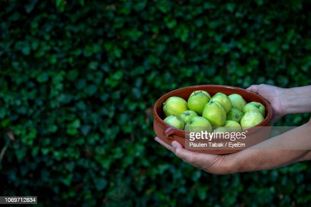 cropped hands holding bowl with fruits against plants - paulien tabak stock-fotos und bilder