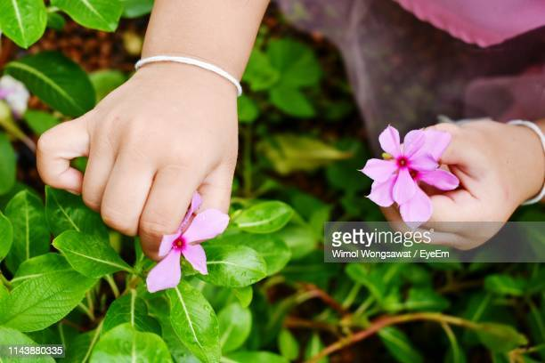 cropped hands holding pink flowers - wimol wongsawat stock photos and pictures