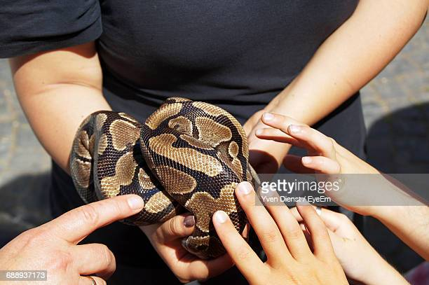 Cropped Hands Of Children Touching Snake Held By Woman