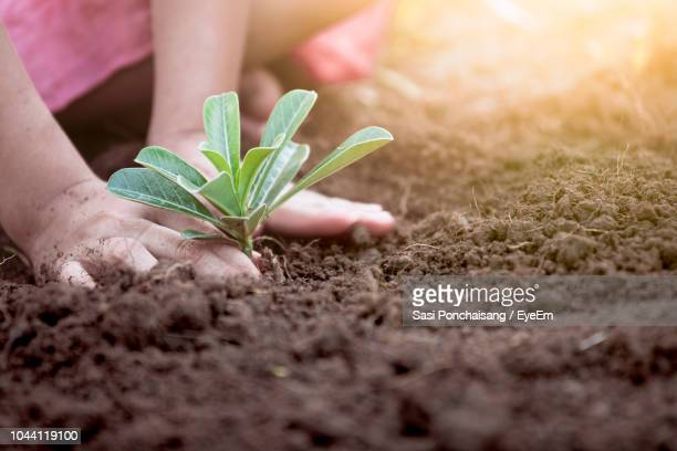 cropped hands of girl planting in garden - very young thai girls stock photos and pictures