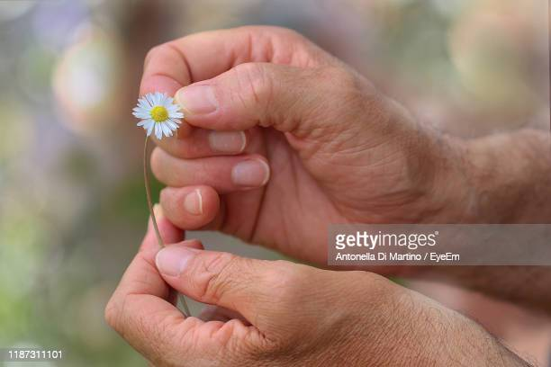 cropped hands of ma n holding flower - antonella di martino foto e immagini stock