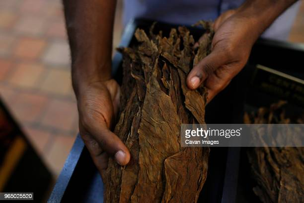 cropped hands of man holding tobacco leaves in workshop - drying stock pictures, royalty-free photos & images