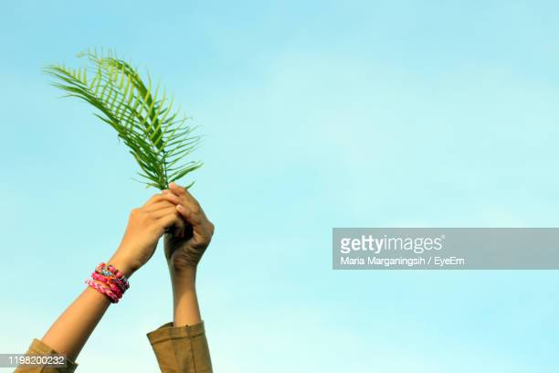 cropped hands of woman holding leaves against sky - palm sunday fotografías e imágenes de stock