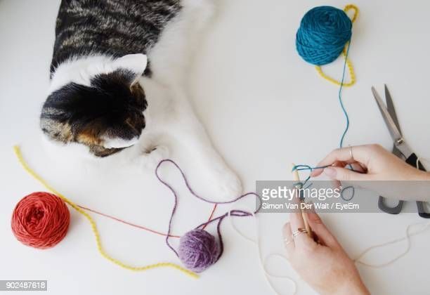 Cropped Hands Of Woman Knitting Wool While Cat Sitting On Table