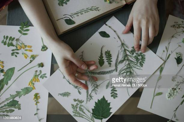 cropped hands of woman making plant scrapbook on table, centralniy, russia - nature stock pictures, royalty-free photos & images