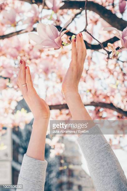 Cropped Hands Of Woman Reaching Cherry Tree