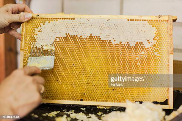Cropped hands of woman scratching honeycomb at industry