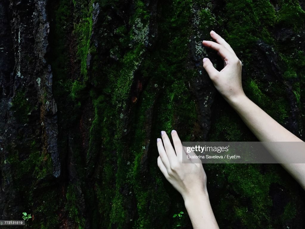 Cropped Hands Of Woman Touching Moss Wall : Stock Photo