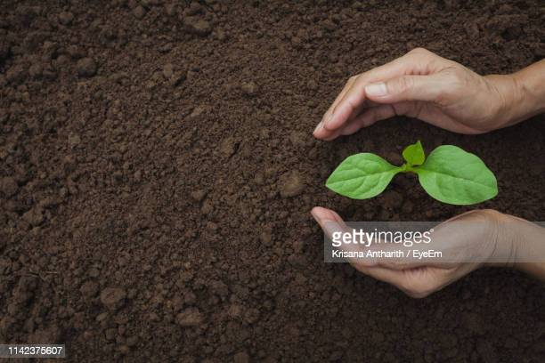 cropped hands planting in garden - soil stock pictures, royalty-free photos & images