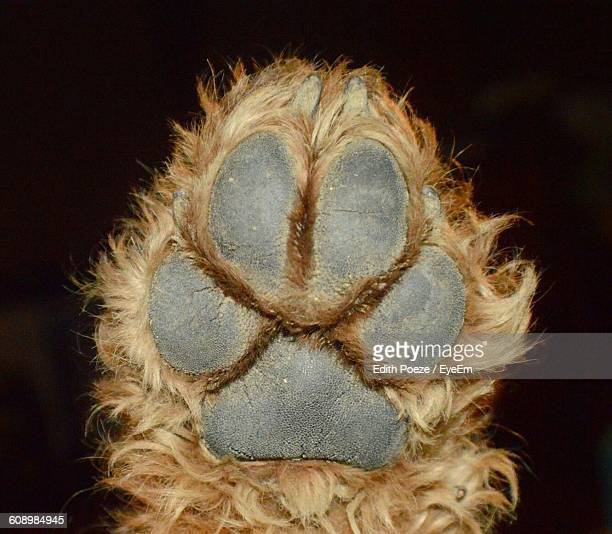Cropped Image Of Airedale Terrier Paw At Night