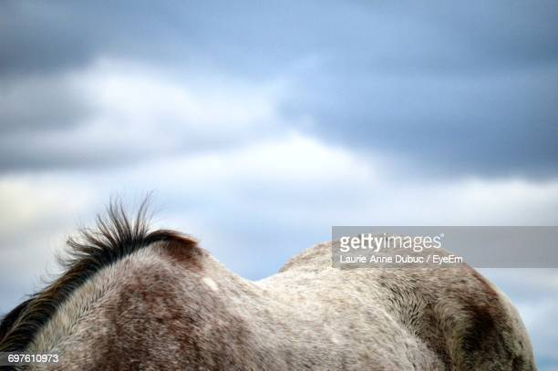 Cropped Image Of Appaloosa Against Cloudy Sky