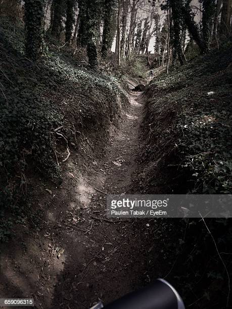 cropped image of bicycle on dirt road in forest - paulien tabak foto e immagini stock
