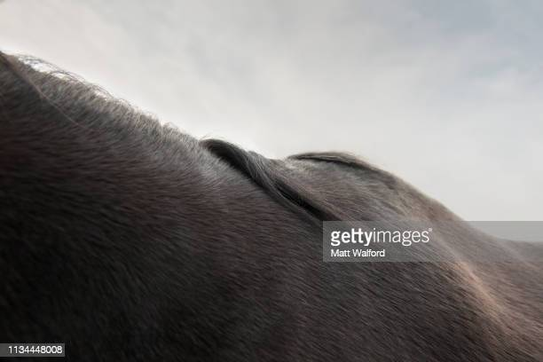 cropped image of black horse's neck and back - animal body stock pictures, royalty-free photos & images