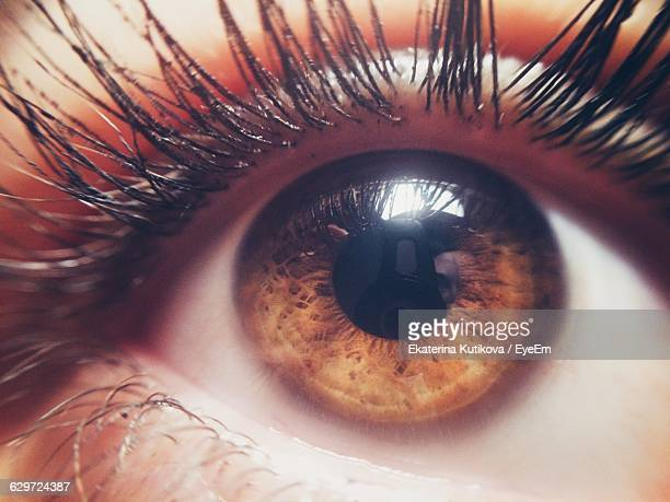 cropped image of brown eyes - brown eyes stock pictures, royalty-free photos & images