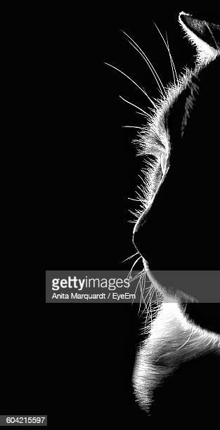 Cropped Image Of Cat Against Black Background