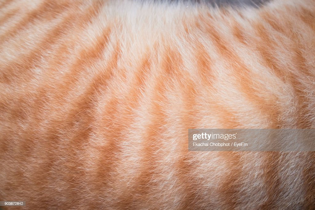 Cropped Image Of Cat Hair : Stock-Foto