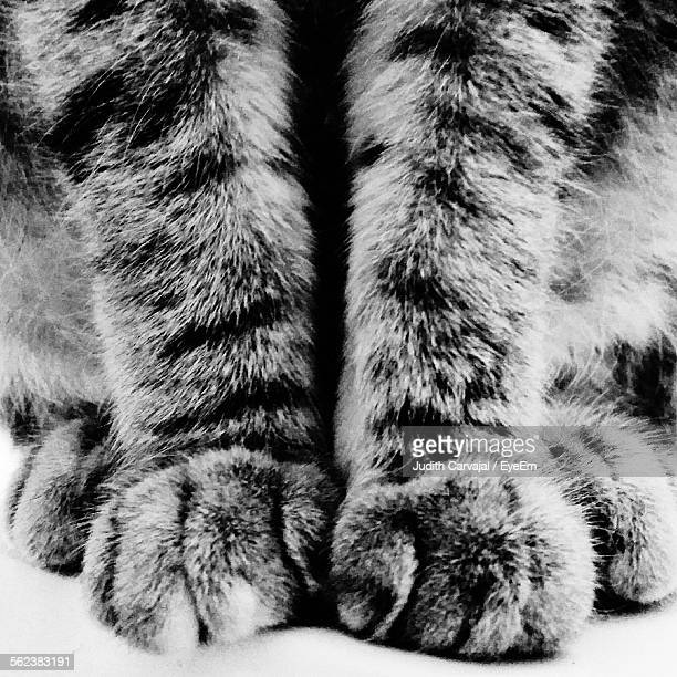 Cropped Image Of Cat Legs