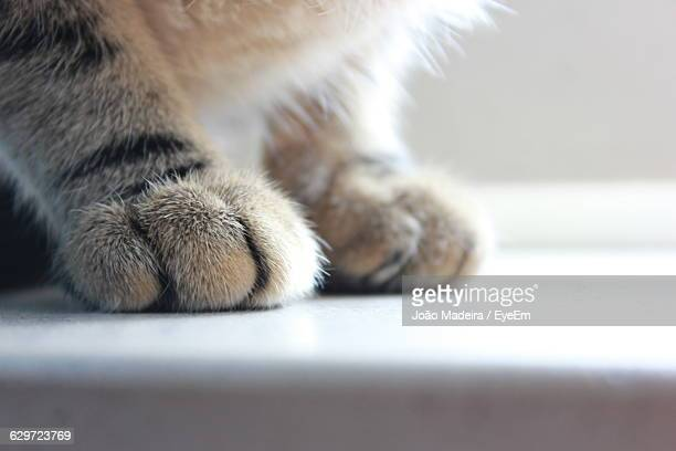 Cropped Image Of Cat Paw