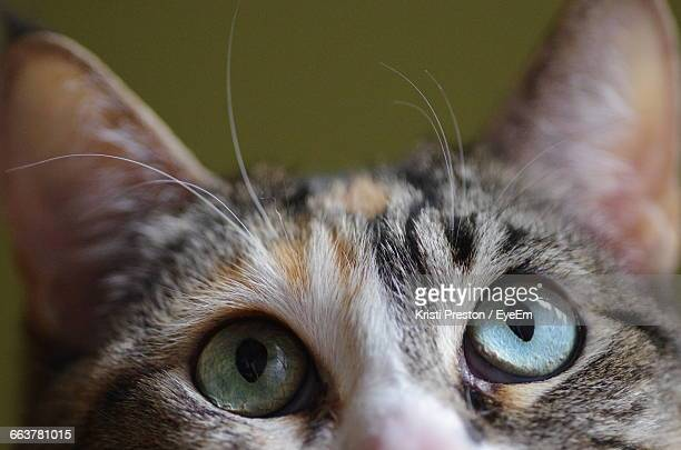 Cropped Image Of Cat