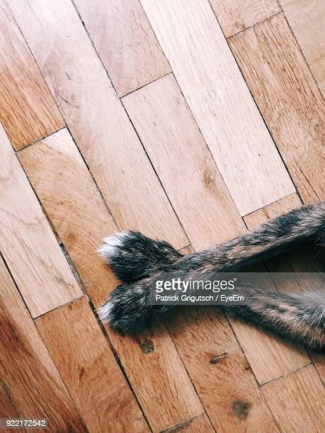 cropped image of dog legs on hardwood floor - paw stock pictures, royalty-free photos & images