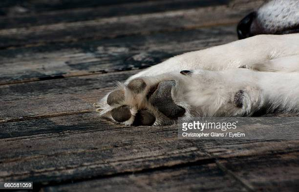 Cropped Image Of Dog Lying On Wooden Floor