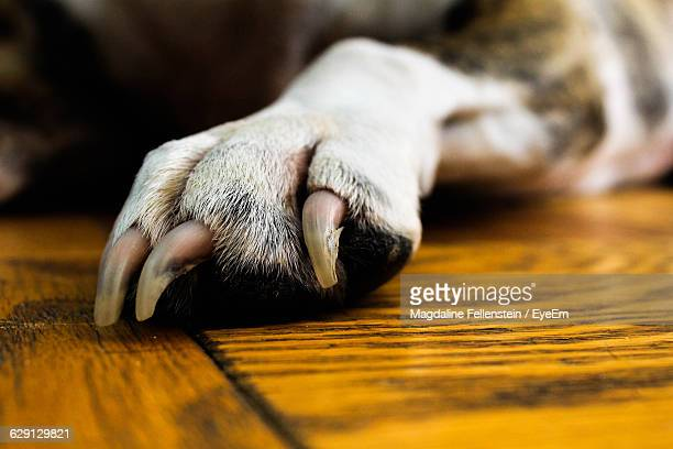 Cropped Image Of Dog Paw On Wooden Floor