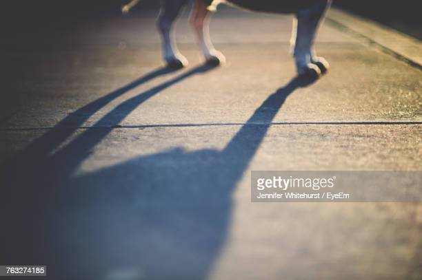 Cropped Image Of Dog Standing On Footpath