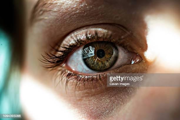 cropped image of girl eye - occhi nocciola foto e immagini stock