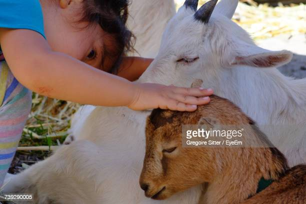 Cropped Image Of Girl Stroking Kid Goat On Field
