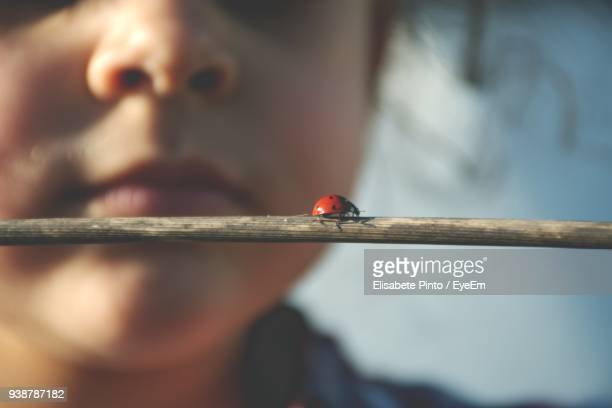 cropped image of girl with ladybug on stick - coccinella foto e immagini stock