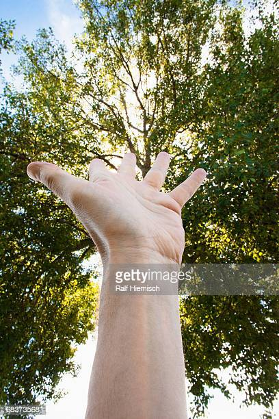 Cropped image of hand against trees