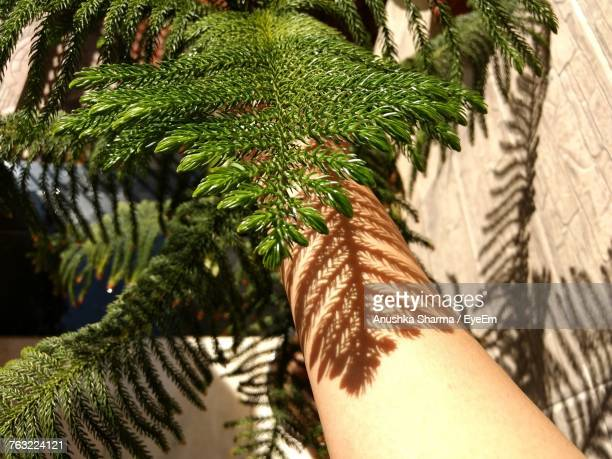 Cropped Image Of Hand By Christmas Tree