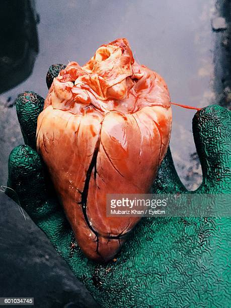 cropped image of hand holding animal heart - broken heart stock pictures, royalty-free photos & images