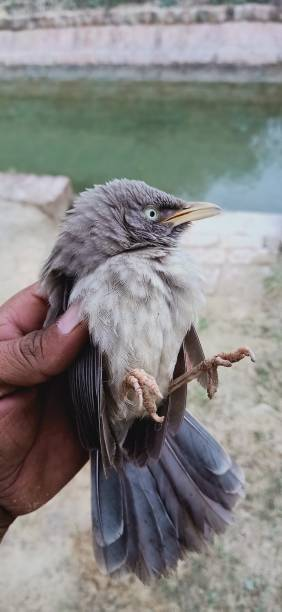 Cropped Image Of Hand Holding Bird