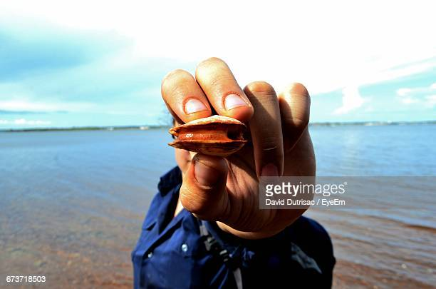 Cropped Image Of Hand Holding Clam At Beach Against Sky