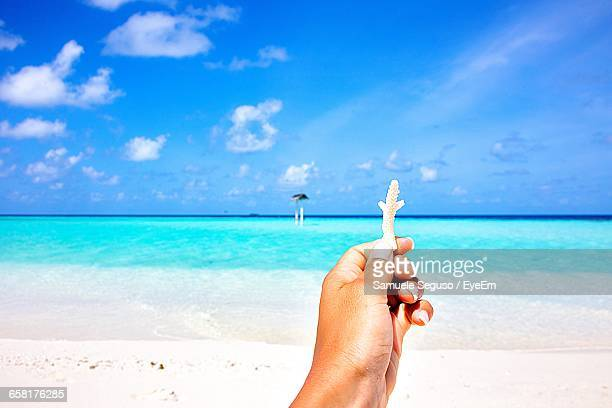Cropped Image Of Hand Holding Coral At Beach Against Sky