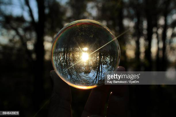 Cropped Image Of Hand Holding Crystal Ball With Reflection Of Trees Seen On It
