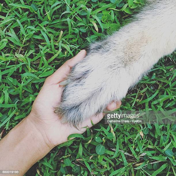 Cropped Image Of Hand Holding Dog Paw On Field