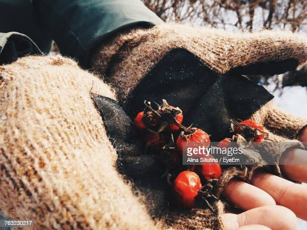 Cropped Image Of Hand Holding Dried Rose Hips During Winter